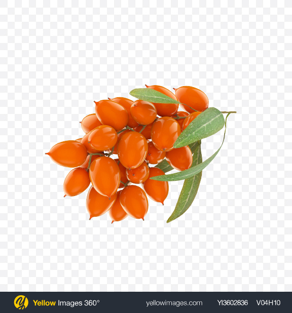 Download Sea Buckthorns Transparent PNG on Yellow Images 360°
