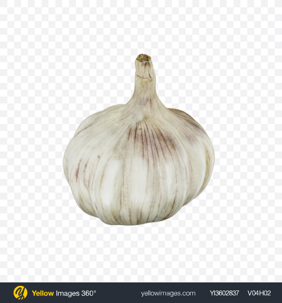 Download Head of Garlic Transparent PNG on Yellow Images 360°