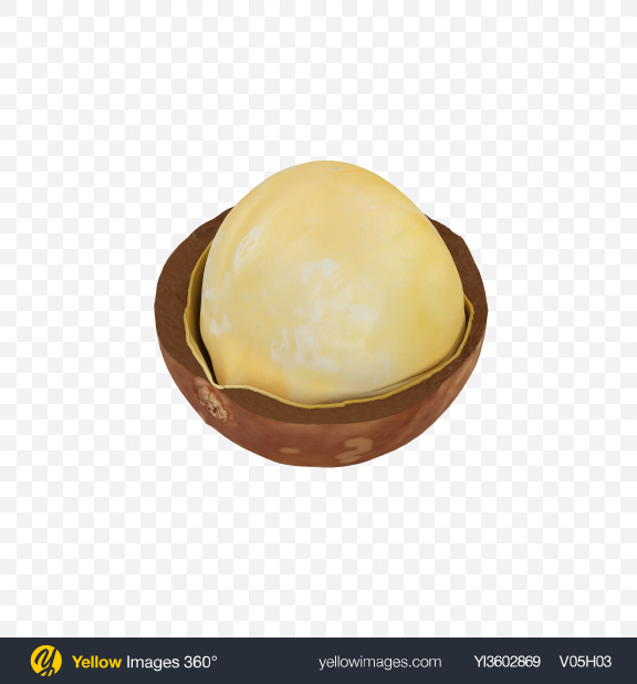 Download Macadamia in Shell Transparent PNG on Yellow Images 360°