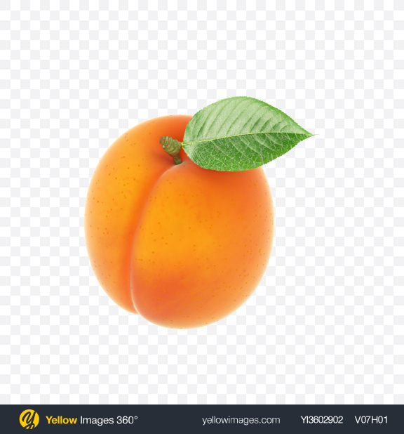 Download Apricot Transparent PNG on Yellow Images 360°