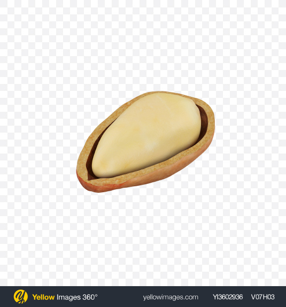 Download Pine Nut in Shell Transparent PNG on Yellow Images 360°
