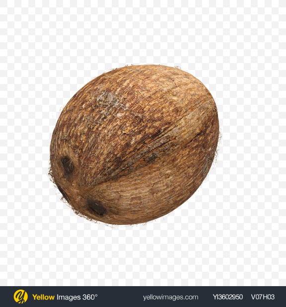 Download Coconut Transparent PNG on Yellow Images 360°
