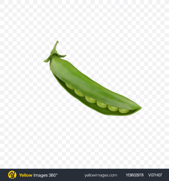 Download Half Opened Pea Pod Transparent PNG on Yellow Images 360°