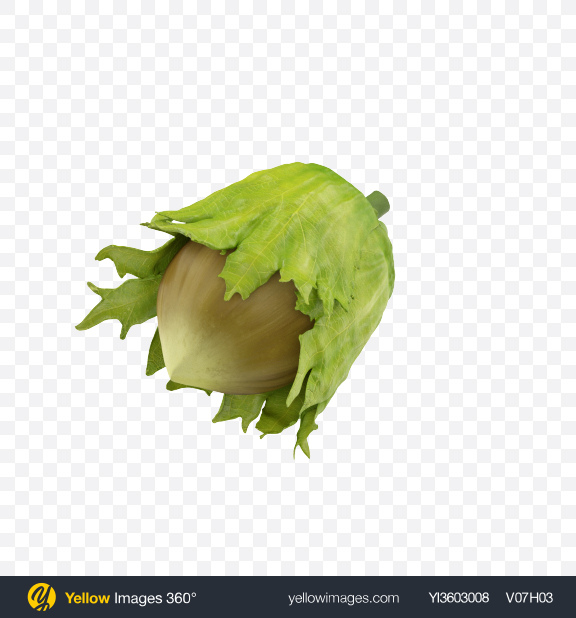 Download Green Hazelnut in Sleeve Transparent PNG on Yellow Images 360°