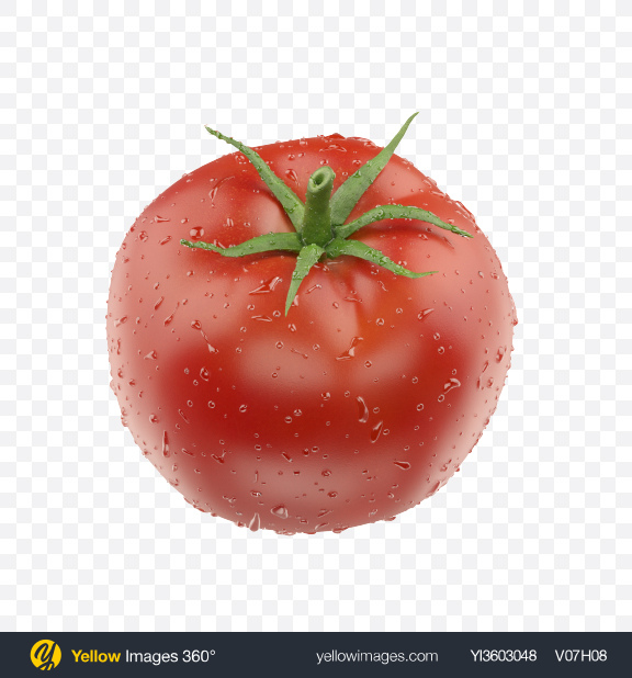 Download Tomato with Water Drops Transparent PNG on Yellow Images 360°