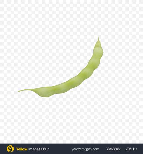 Download Kidney Bean Pod Transparent PNG on Yellow Images 360°