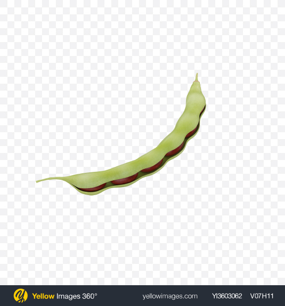 Download Half Opened Kidney Bean Pod Transparent PNG on Yellow Images 360°