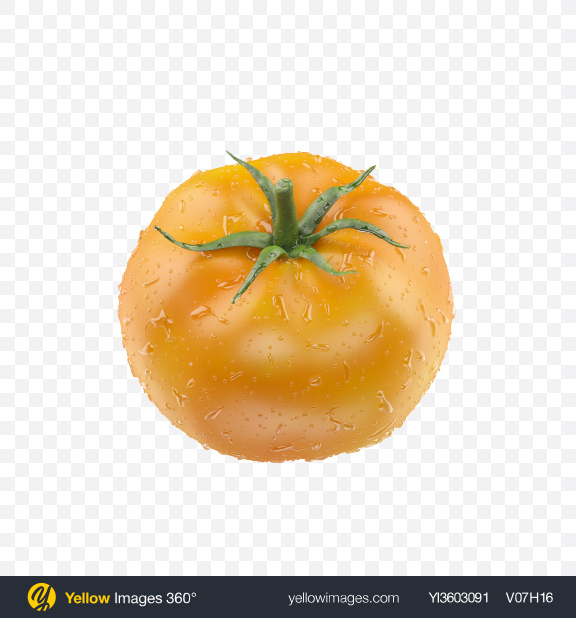 Download Yellow Tomato with Water Drops Transparent PNG on Yellow Images 360°
