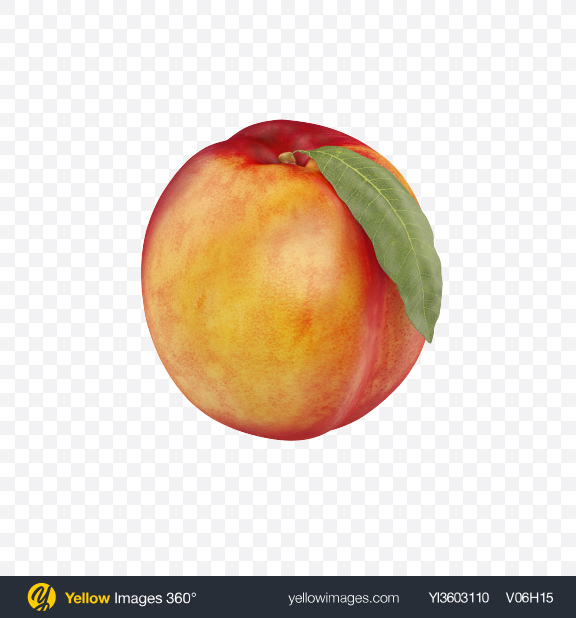 Download Nectarine with Leaf Transparent PNG on Yellow Images 360°