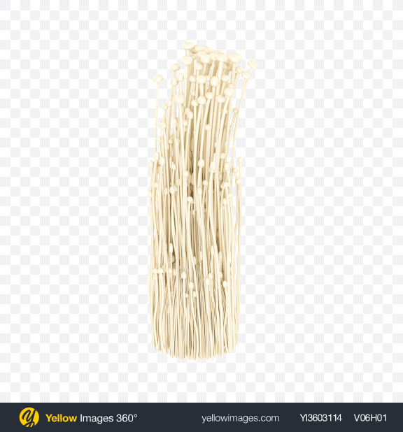 Download Enoki Transparent PNG on Yellow Images 360°