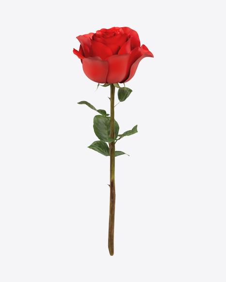 Red Rose Branch
