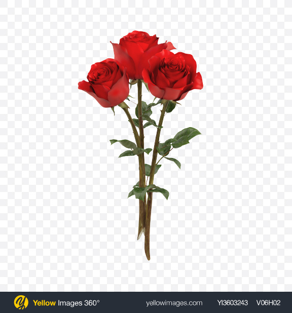 Download Red Rose Bouquet Transparent PNG on Yellow Images 360°