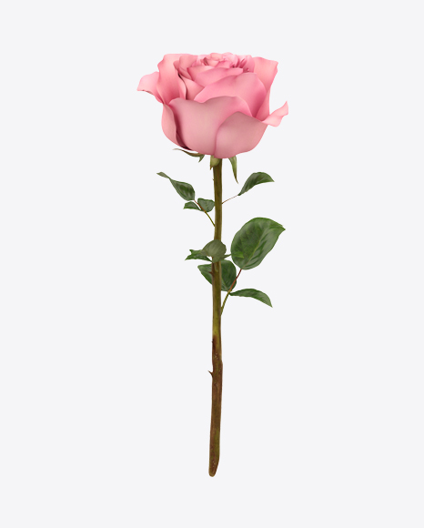 Pink Rose Branch