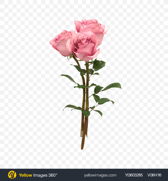 Download Pink Rose Bouquet Transparent PNG on Yellow Images 360°