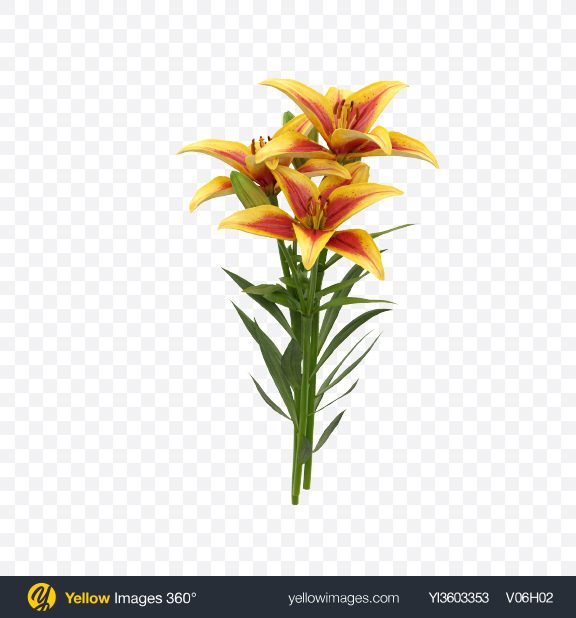 Download Lily Bouquet Transparent PNG on Yellow Images 360°