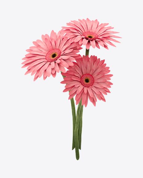 Pink Gerbera Bouquet