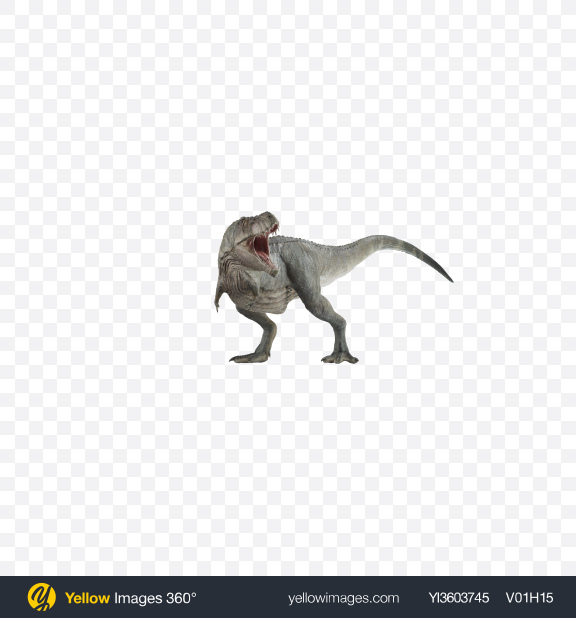 Download Tyrannosaurus Transparent PNG on Yellow Images 360°