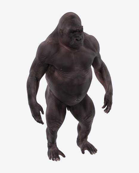 Hairless Gorilla