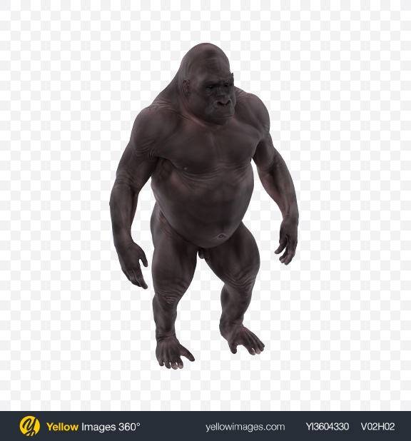 Download Hairless Gorilla Transparent PNG on Yellow Images 360°