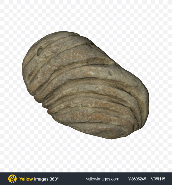 Download Fossil Stone Transparent PNG on Yellow Images 360°