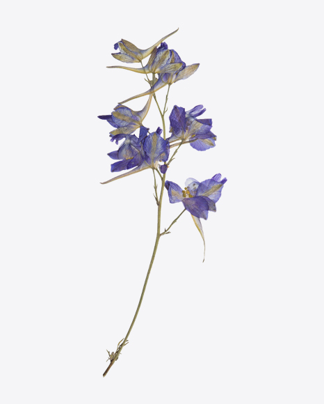 Branch of Dried Blue Flowers