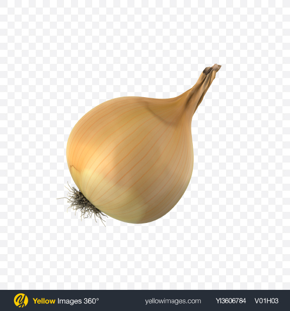 Download Onion Bulb Transparent PNG on Yellow Images 360°