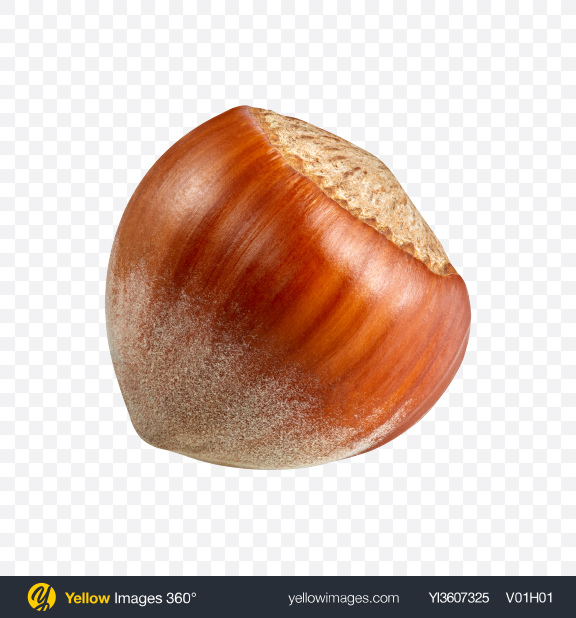 Download Hazelnut Transparent PNG on YELLOW Images
