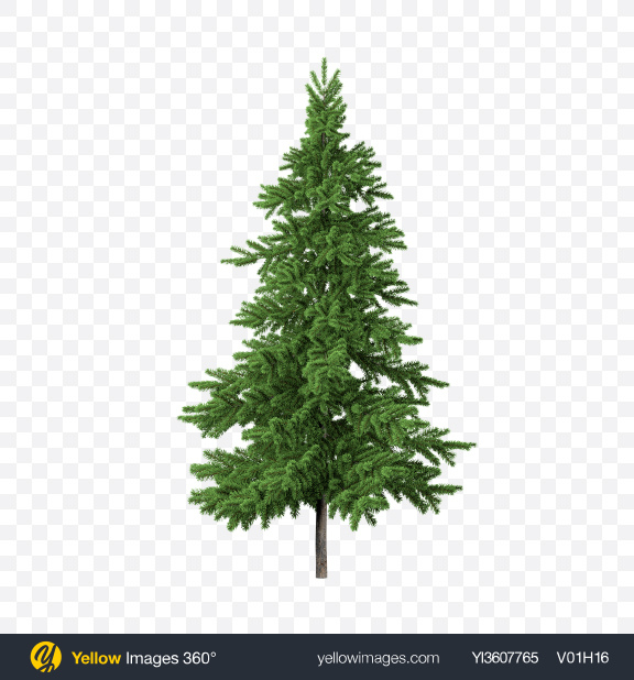 Download Fir Tree Transparent PNG on PNG Images