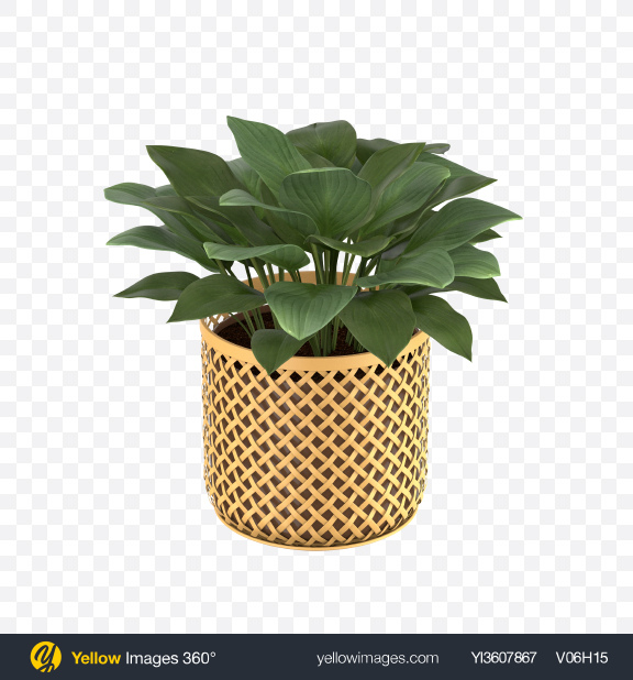 Download Philodendron in Pot Transparent PNG on PNG Images