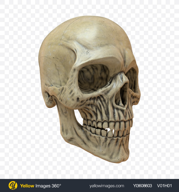 Download Skull Transparent PNG on PNG Images