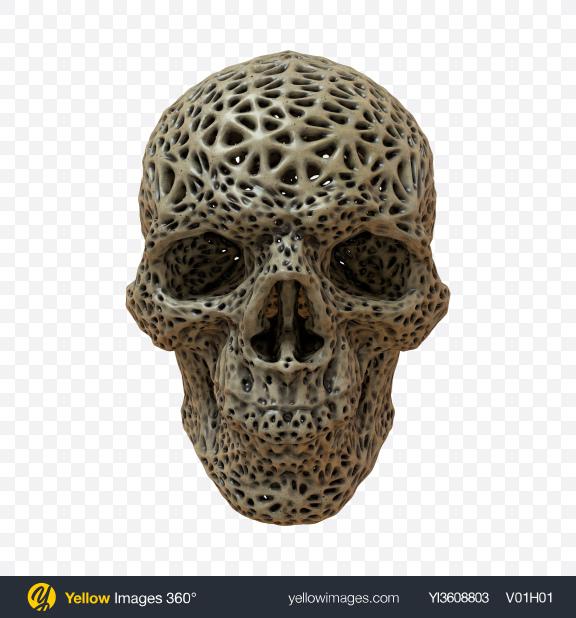 Download Skull Transparent PNG on PNG Images