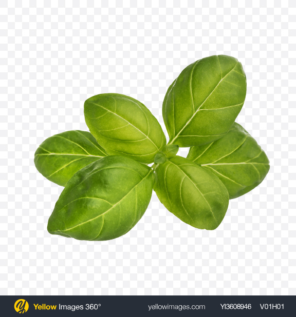 Download Basil Leaves Transparent PNG on YELLOW Images