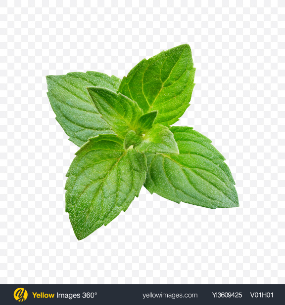 Download Mint Branch Transparent PNG on YELLOW Images