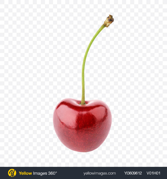 Download Cherry with Stem Transparent PNG on YELLOW Images
