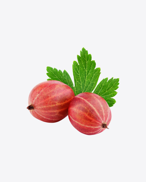 Red Gooseberry with Leaf