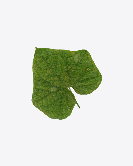 Green Tree Leaf