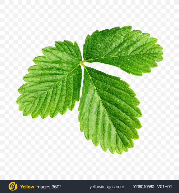 Download Strawberry Leaf Transparent PNG on YELLOW Images
