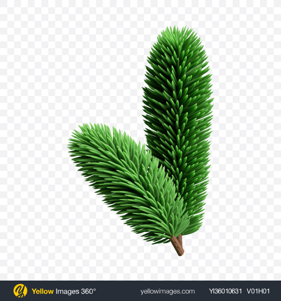 Download Spruce Branch Transparent PNG on YELLOW Images
