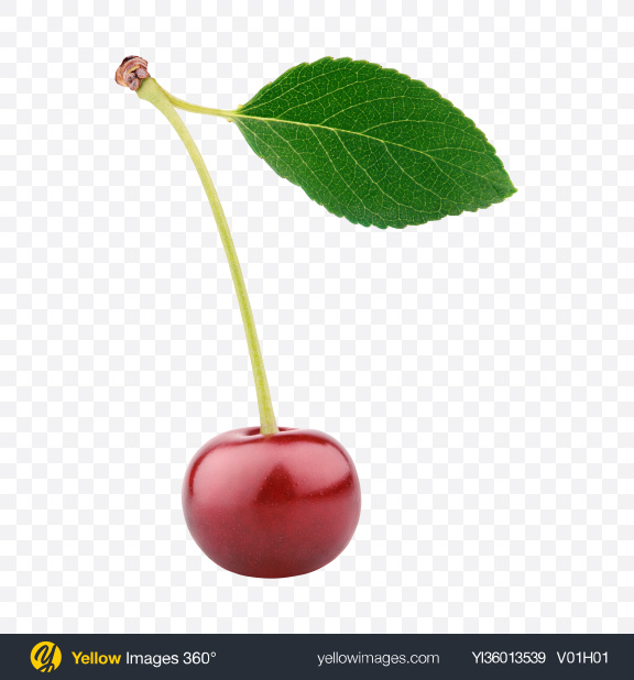 Download Cherry with Leaf Transparent PNG on YELLOW Images