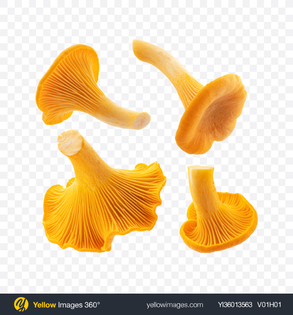 Download Chanterelle Mushrooms Set Transparent PNG on YELLOW Images