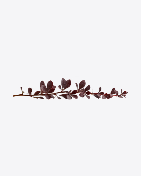 Red Bush Branch