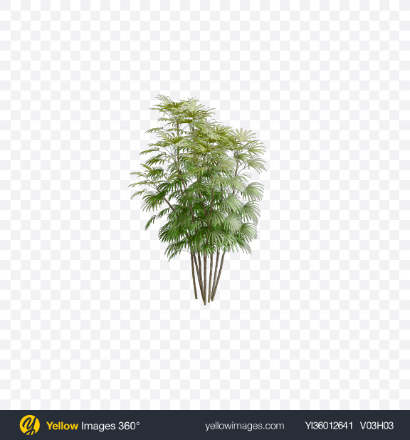 Download Palm Trees Transparent PNG on YELLOW Images