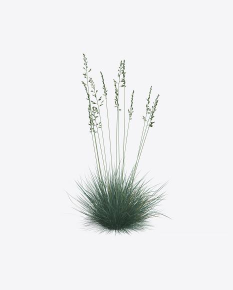 PNG Fescue Plant