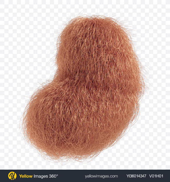 Download Brown Fur Shape Transparent PNG on YELLOW Images