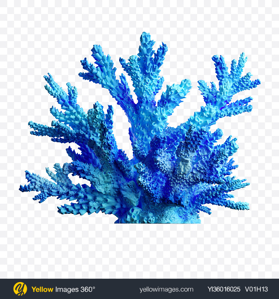 Download Blue Coral Transparent PNG on YELLOW Images
